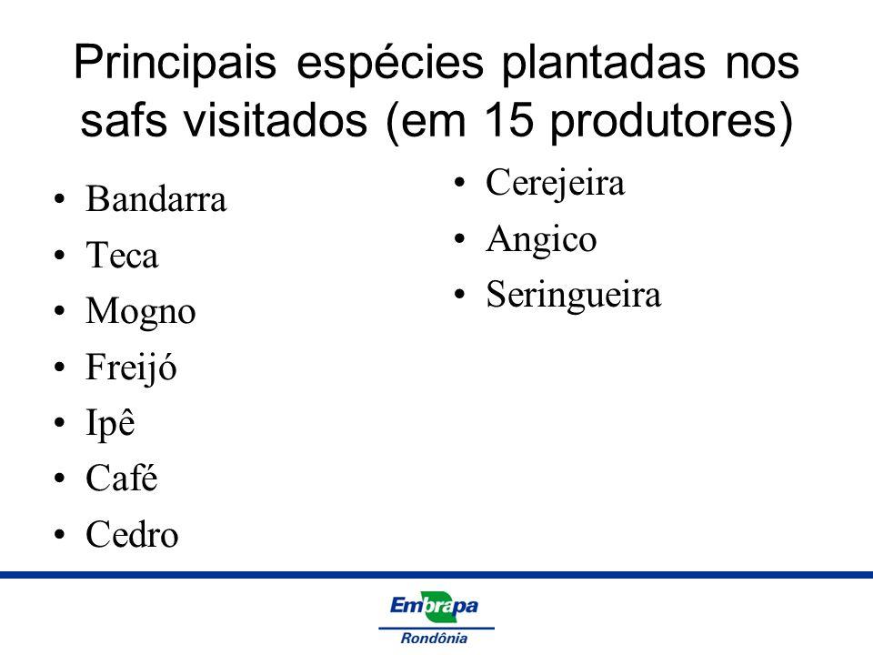Principais espécies plantadas nos safs visitados (em 15 produtores)