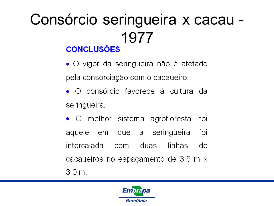Consórcio seringueira x cacau - 1977