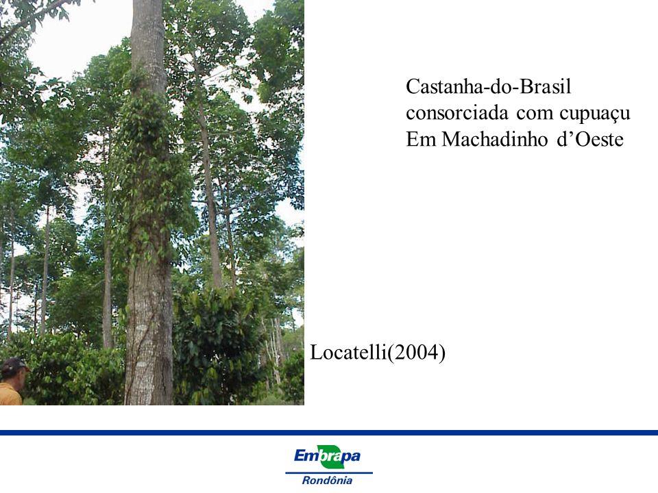 Castanha-do-Brasil consorciada com cupuaçu Em Machadinho d'Oeste Locatelli(2004)