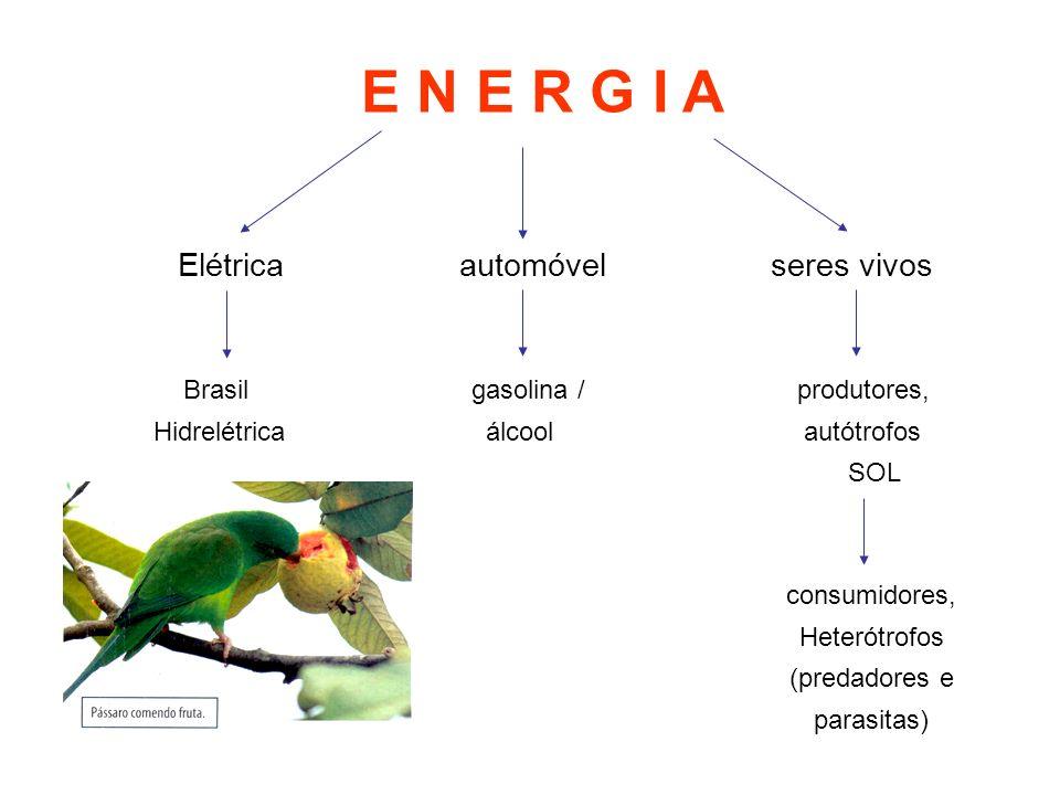E N E R G I A Elétrica automóvel seres vivos