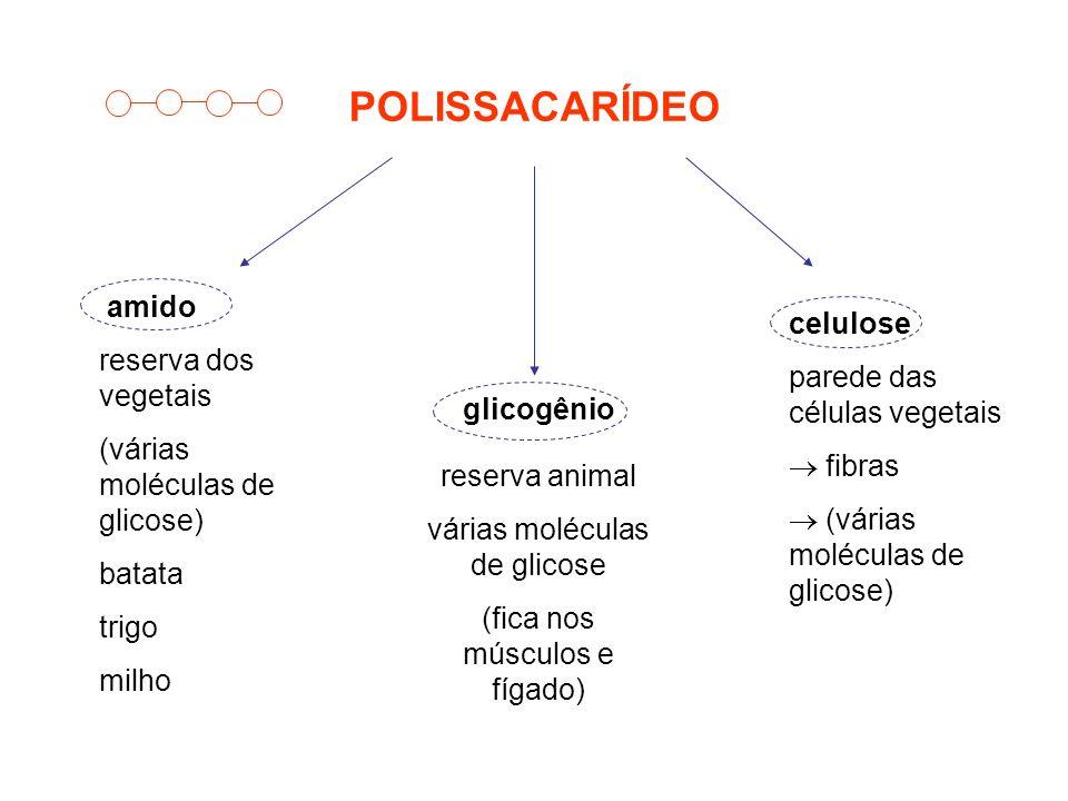 POLISSACARÍDEO amido reserva dos vegetais celulose