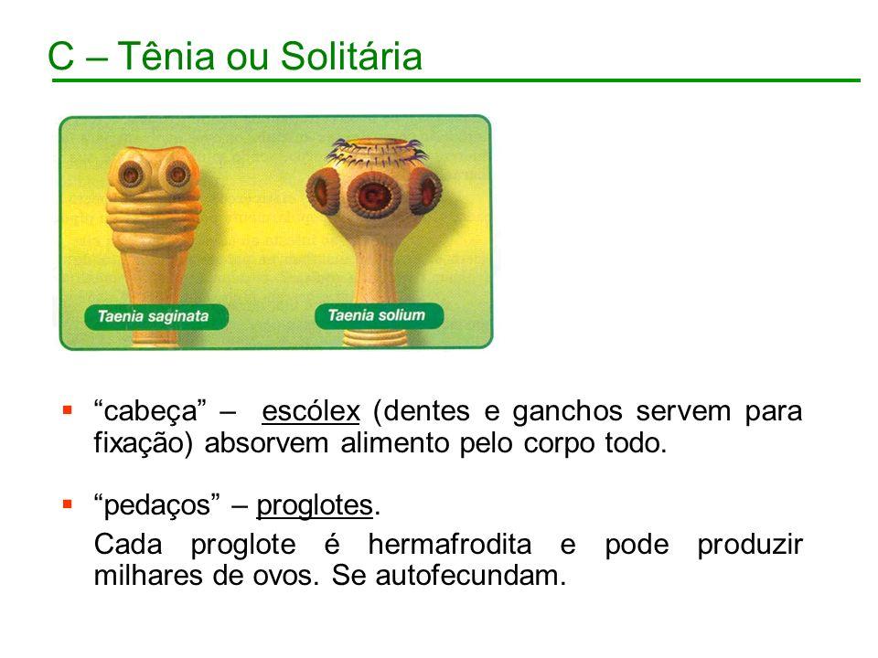 C – Tênia ou Solitária cabeça – escólex (dentes e ganchos servem para fixação) absorvem alimento pelo corpo todo.