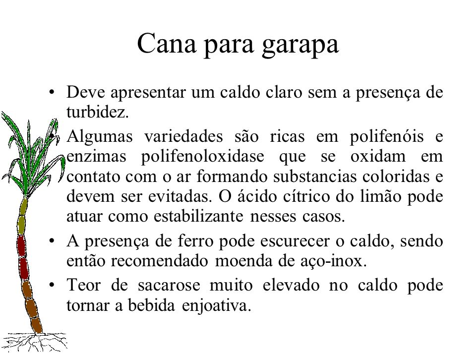 Cana para garapaDeve apresentar um caldo claro sem a presença de turbidez.