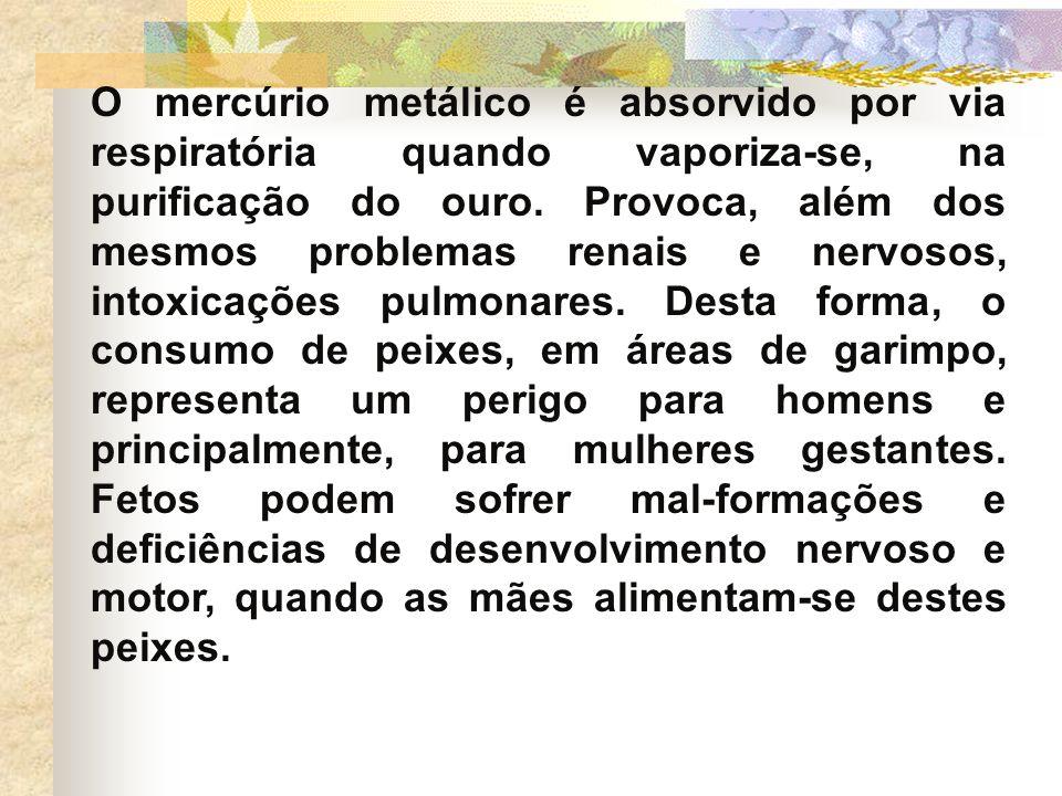 O mercúrio metálico é absorvido por via respiratória quando vaporiza-se, na purificação do ouro.