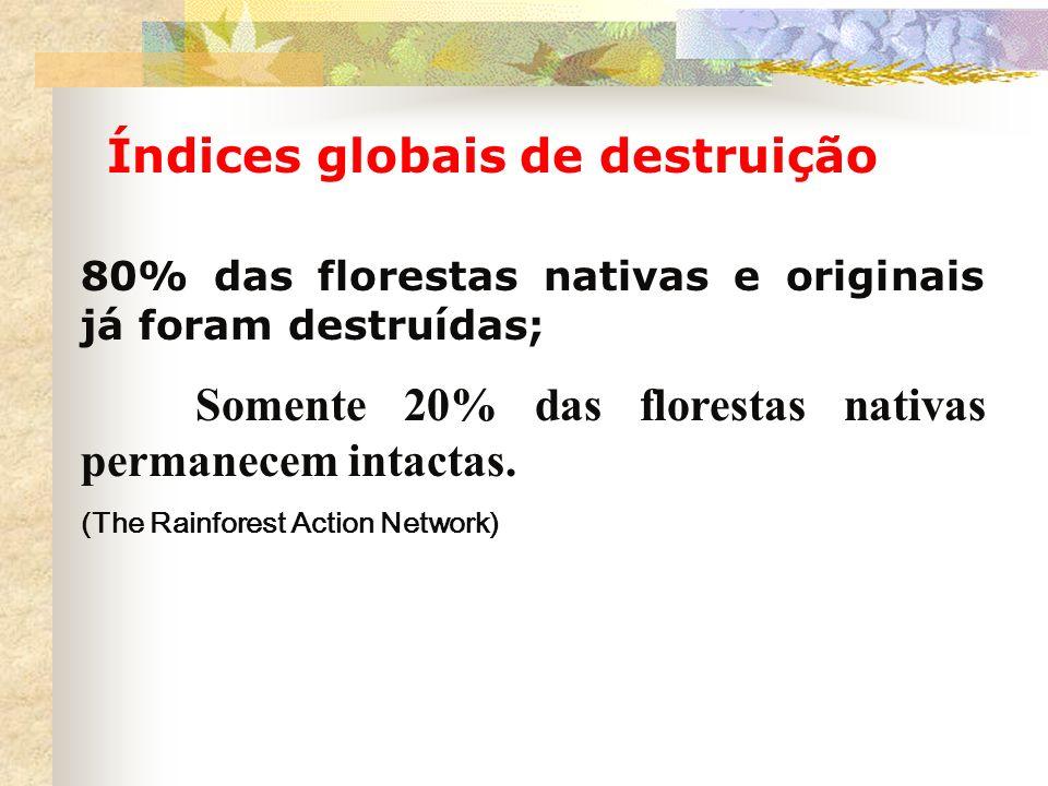 80% das florestas nativas e originais já foram destruídas;