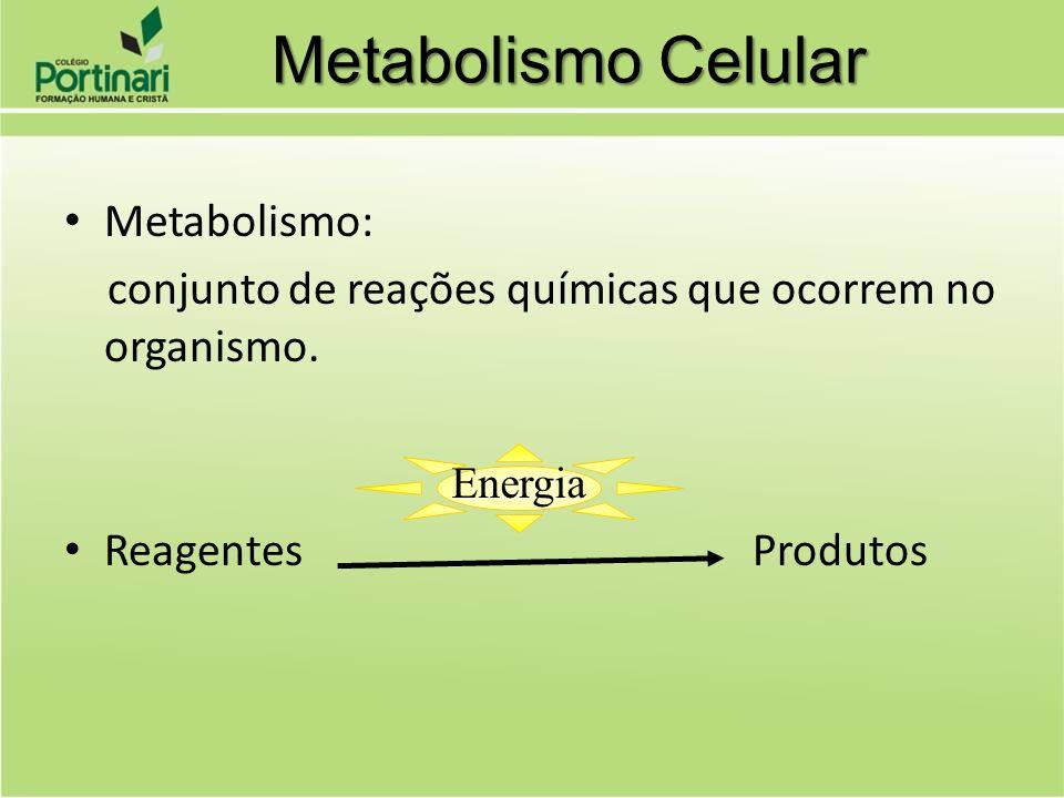 Metabolismo Celular Metabolismo: