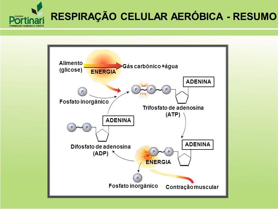 Trifosfato de adenosina Difosfato de adenosina