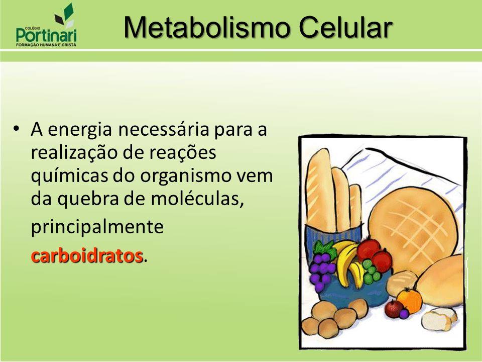 Metabolismo Celular A energia necessária para a realização de reações químicas do organismo vem da quebra de moléculas,