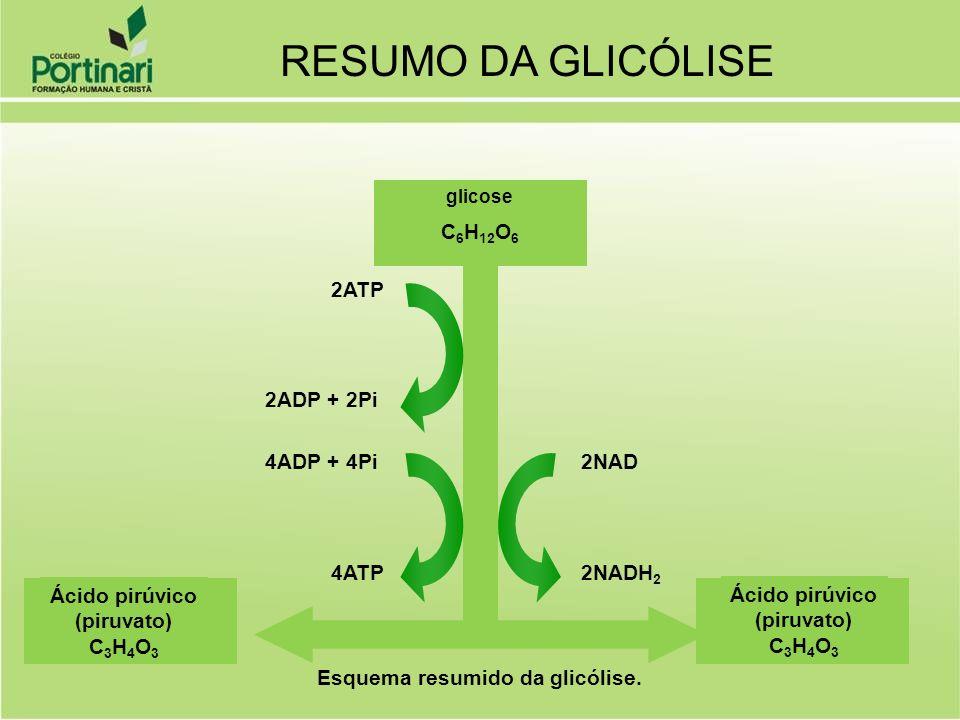 RESUMO DA GLICÓLISE C6H12O6 2ATP 2ADP + 2Pi 4ADP + 4Pi 2NAD 4ATP