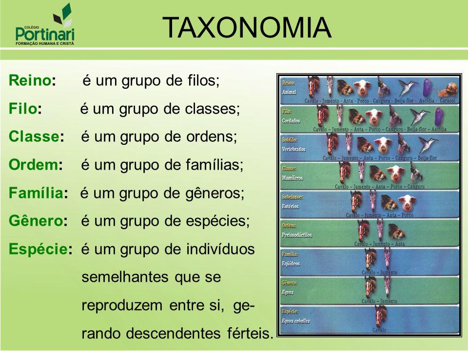 TAXONOMIA Reino: é um grupo de filos; Filo: é um grupo de classes;