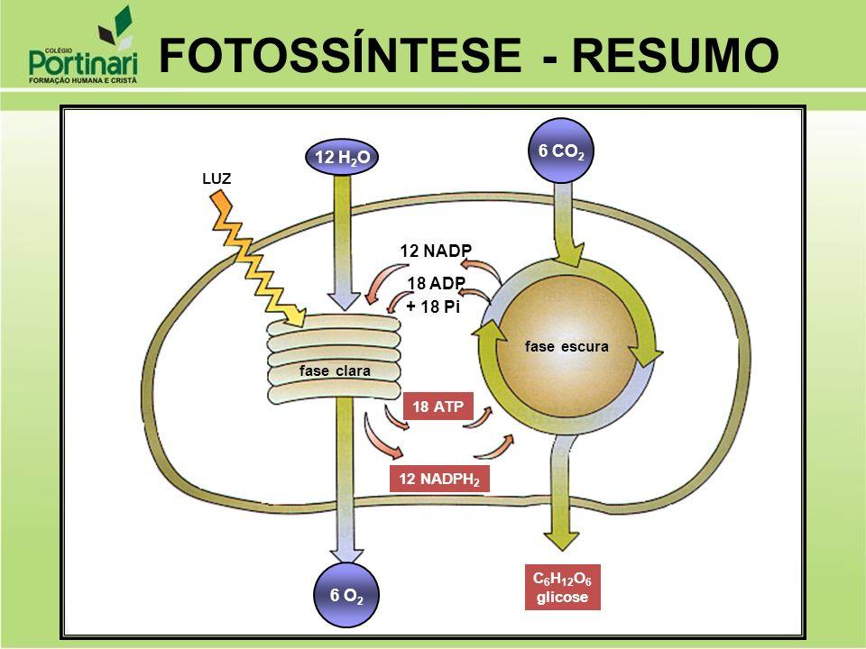 FOTOSSÍNTESE - RESUMO 6 CO2 12 H2O 12 NADP 18 ADP + 18 Pi 6 O2 LUZ
