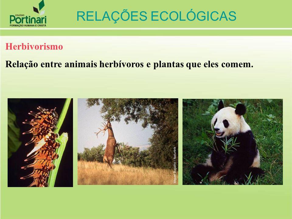 RELAÇÕES ECOLÓGICAS Herbivorismo