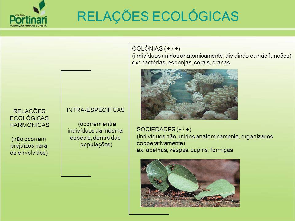 RELAÇÕES ECOLÓGICAS COLÔNIAS ( + / +)