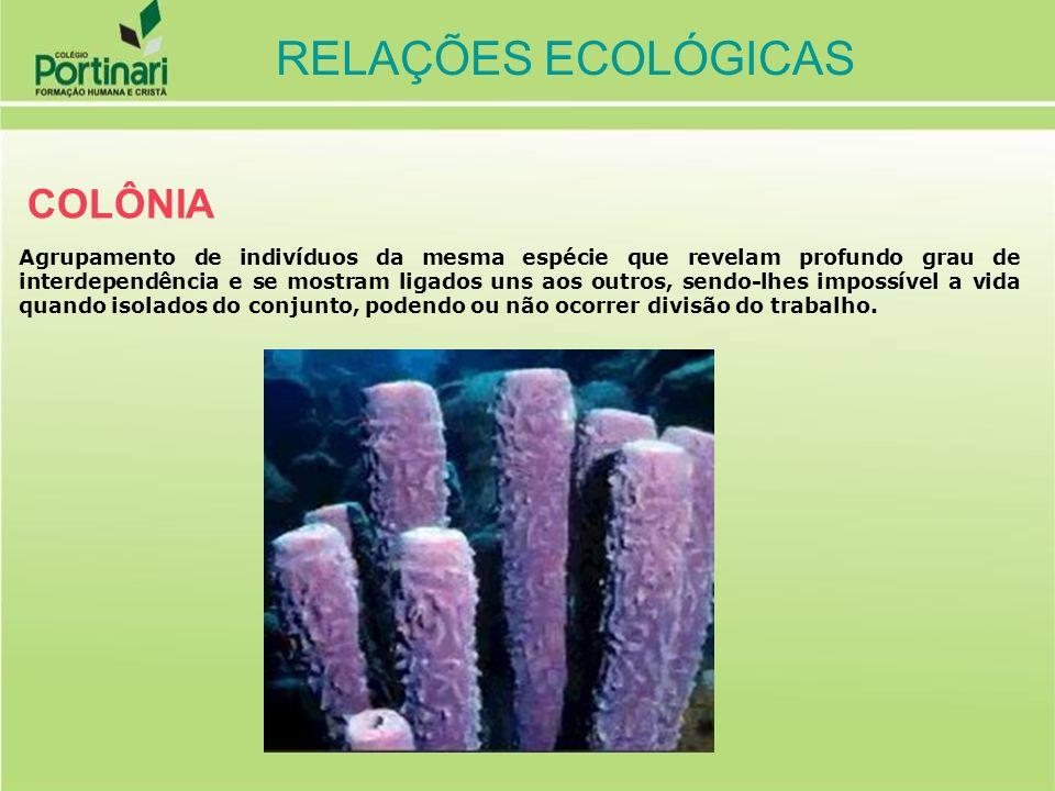 RELAÇÕES ECOLÓGICAS COLÔNIA