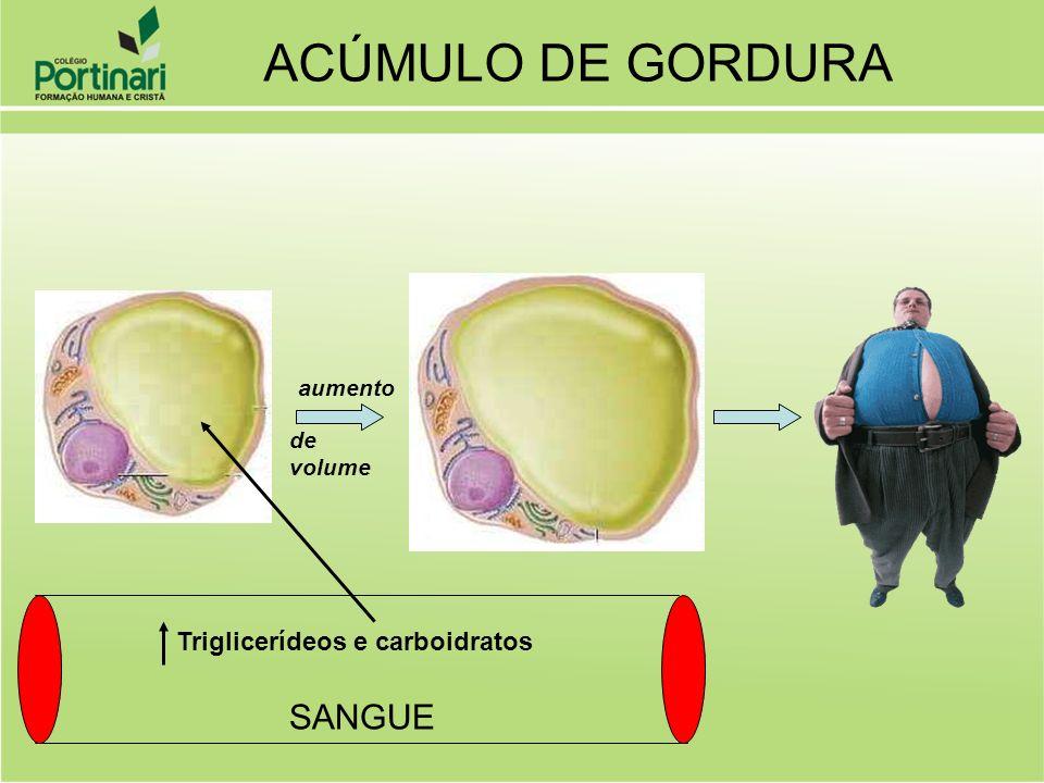 ACÚMULO DE GORDURA SANGUE Triglicerídeos e carboidratos aumento