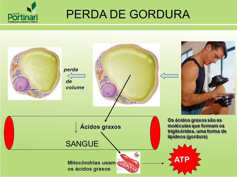PERDA DE GORDURA SANGUE ATP Ácidos graxos perda de volume