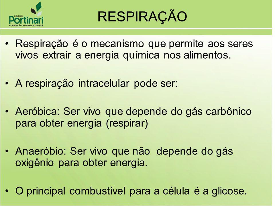 RESPIRAÇÃO Respiração é o mecanismo que permite aos seres vivos extrair a energia química nos alimentos.