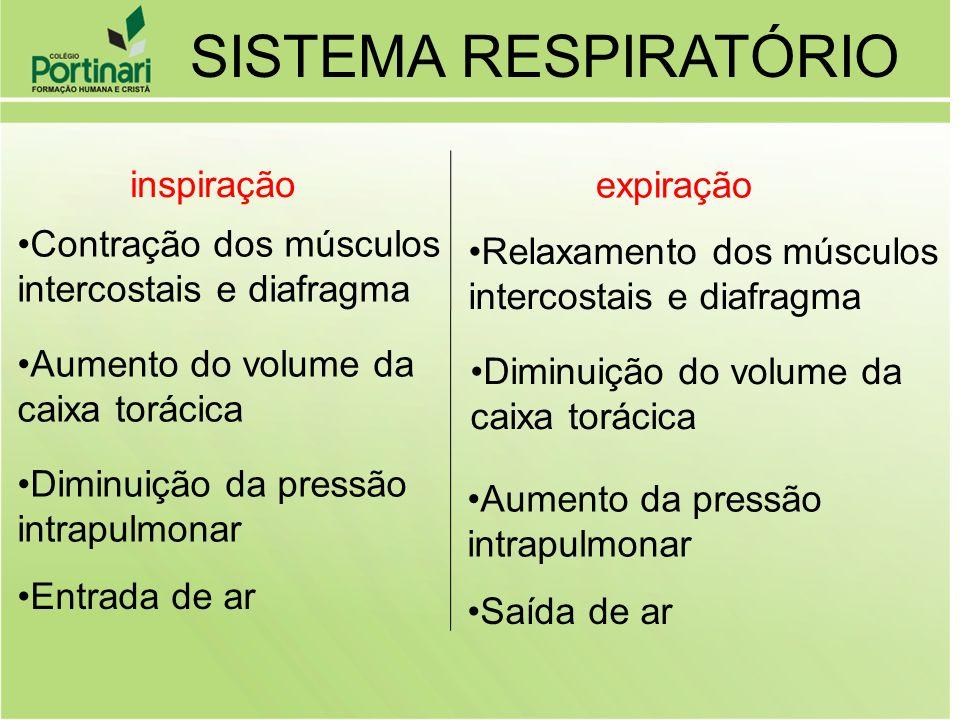 SISTEMA RESPIRATÓRIO inspiração expiração Contração dos músculos