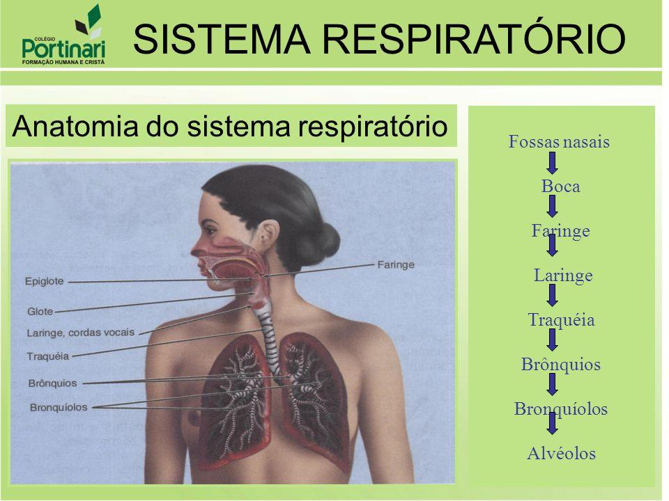 SISTEMA RESPIRATÓRIO Anatomia do sistema respiratório Fossas nasais
