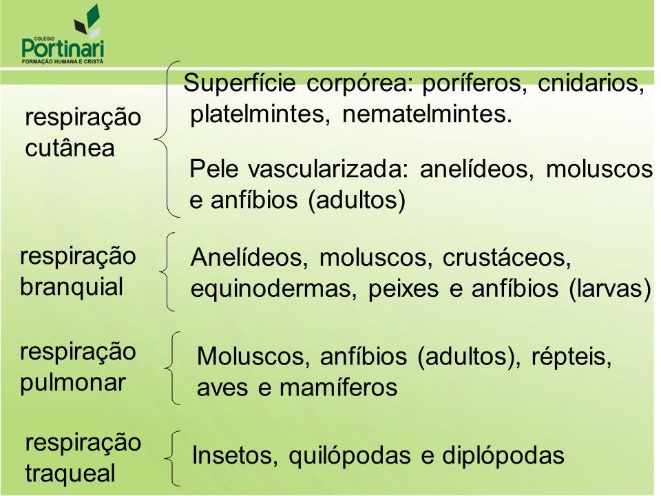 Superfície corpórea: poríferos, cnidarios,