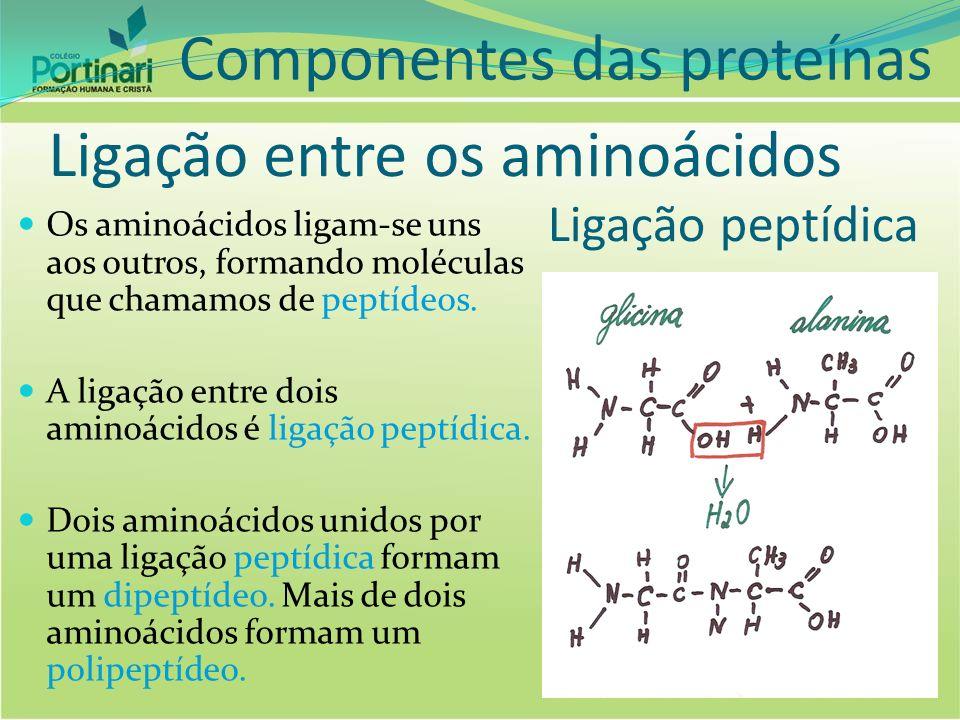 Ligação entre os aminoácidos