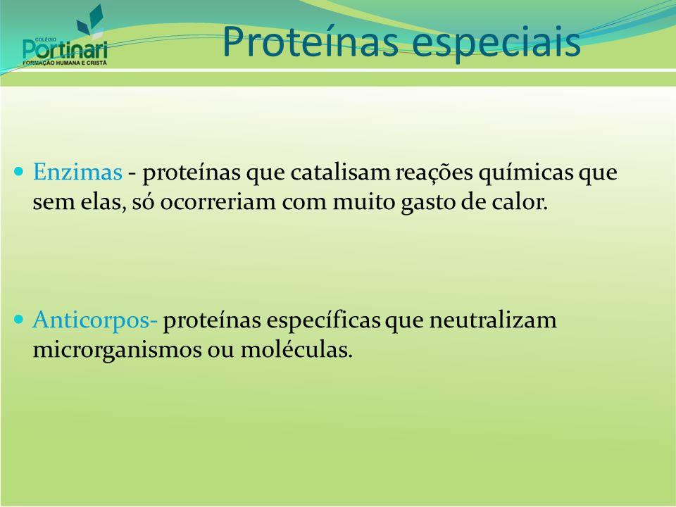 Proteínas especiais Enzimas - proteínas que catalisam reações químicas que sem elas, só ocorreriam com muito gasto de calor.