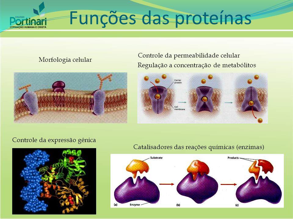 Funções das proteínas Controle da permeabilidade celular