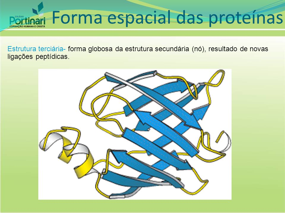 Forma espacial das proteínas