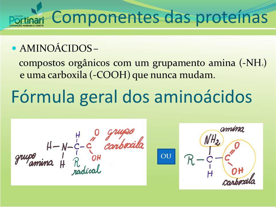 Componentes das proteínas
