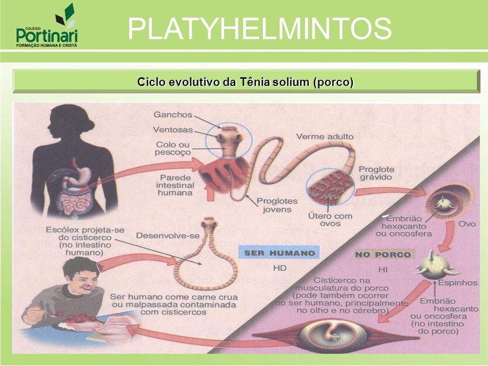 Ciclo evolutivo da Tênia solium (porco)