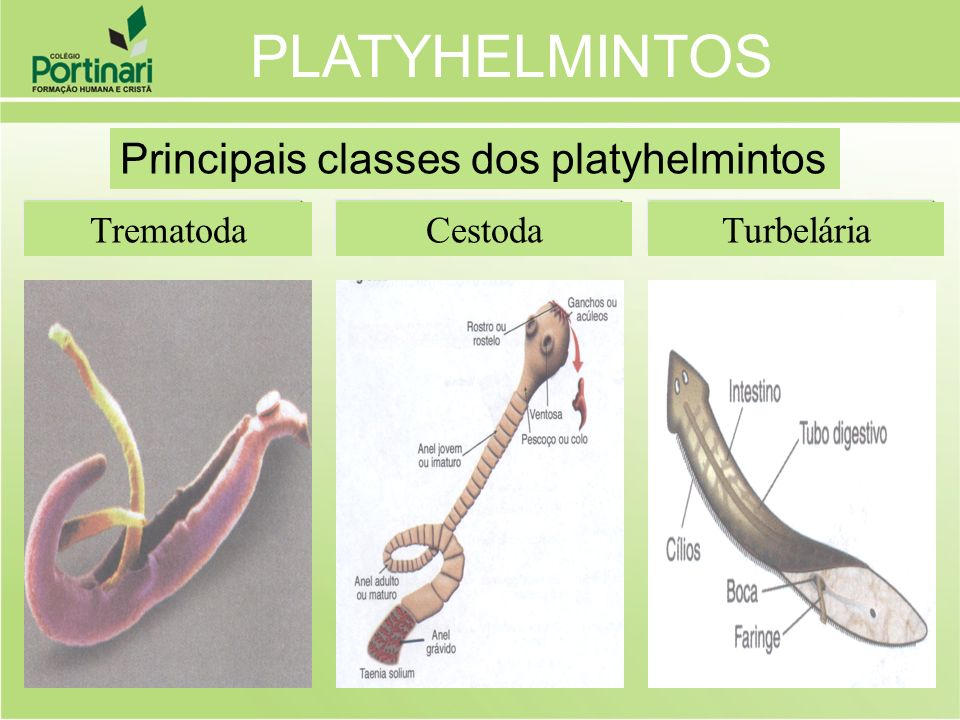 PLATYHELMINTOS Principais classes dos platyhelmintos Trematoda Cestoda