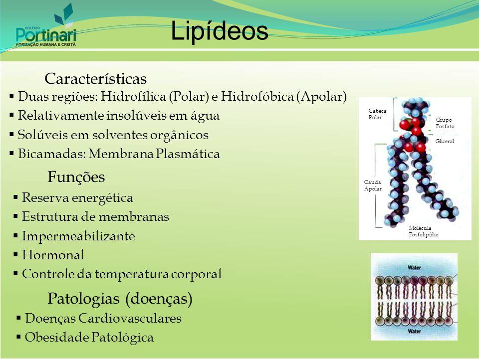 Lipídeos Características Funções Patologias (doenças)