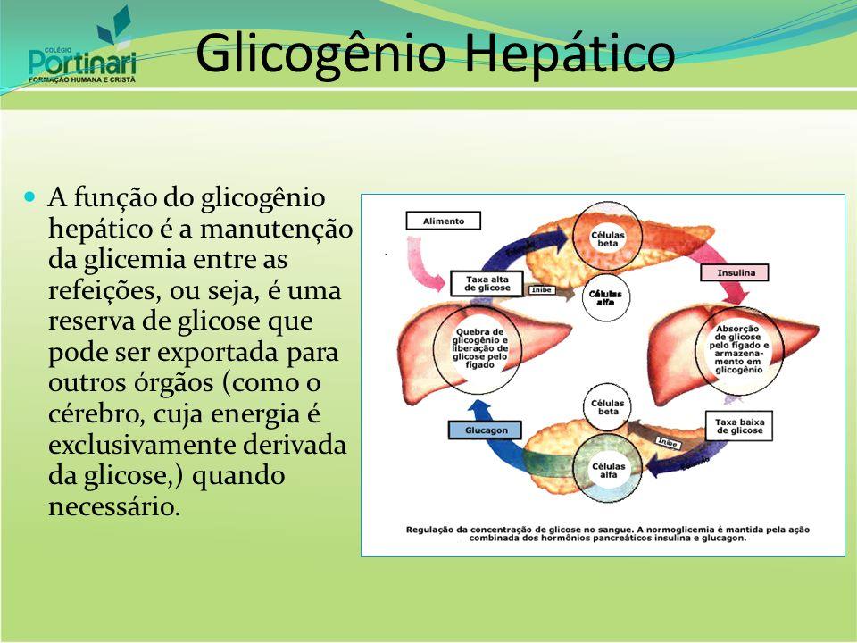 Glicogênio Hepático