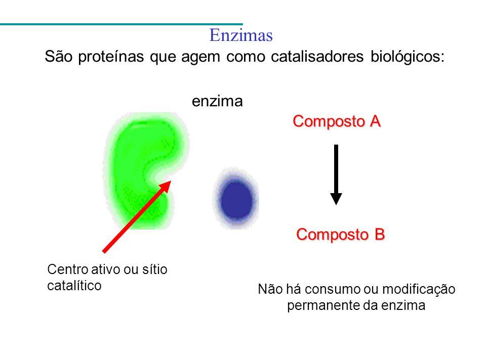 Enzimas São proteínas que agem como catalisadores biológicos: enzima