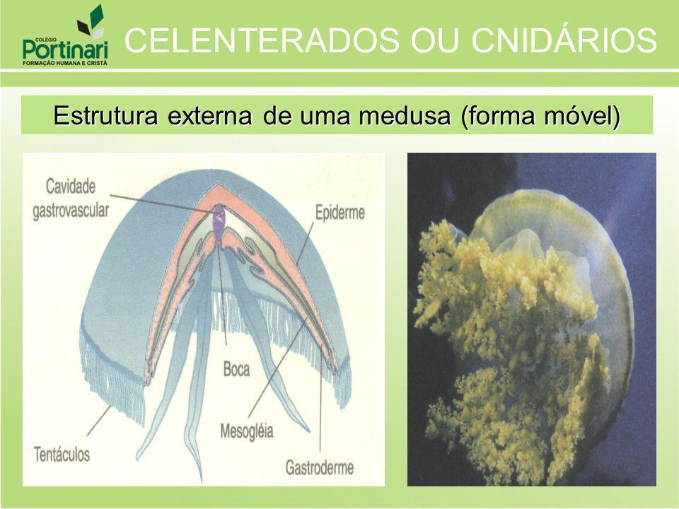 Estrutura externa de uma medusa (forma móvel)