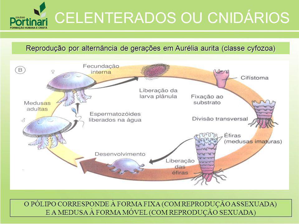 CELENTERADOS OU CNIDÁRIOS