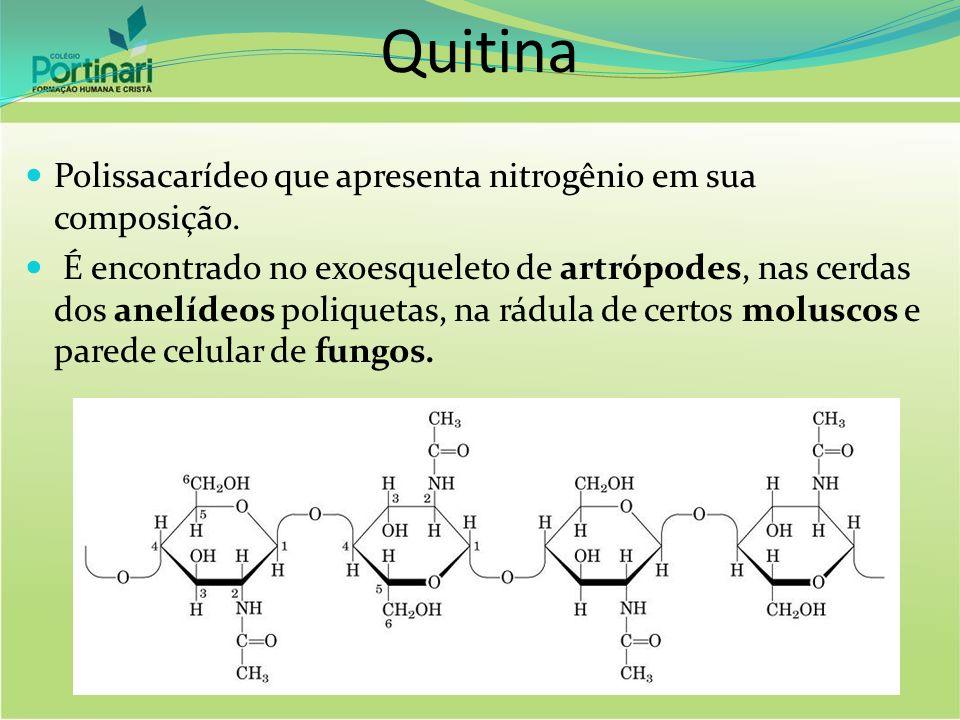 Quitina Polissacarídeo que apresenta nitrogênio em sua composição.