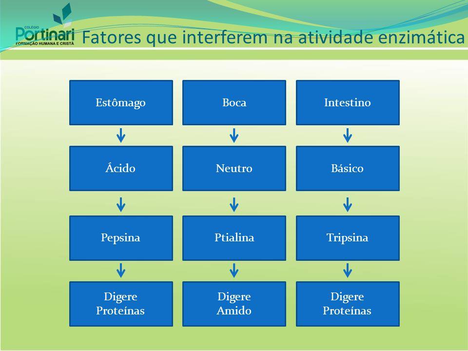 Fatores que interferem na atividade enzimática