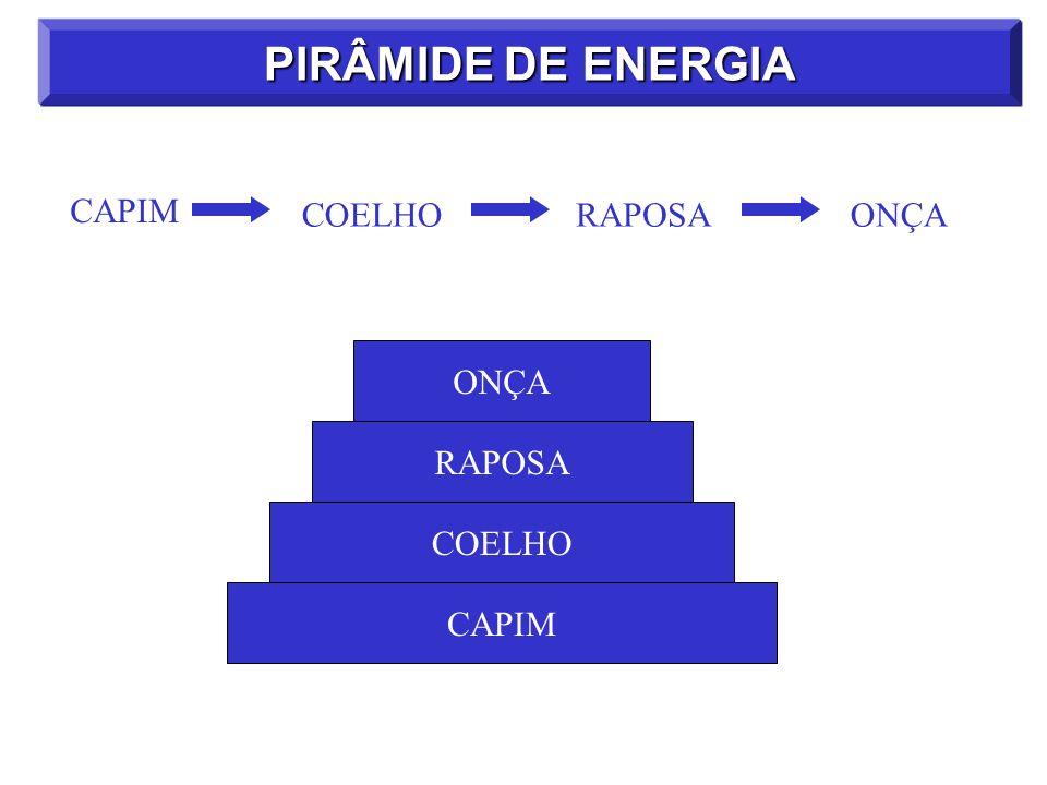 PIRÂMIDE DE ENERGIA CAPIM COELHO RAPOSA ONÇA ONÇA RAPOSA COELHO CAPIM