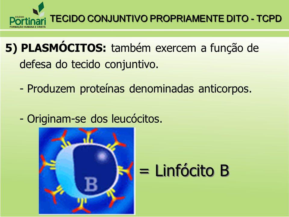 TECIDO CONJUNTIVO PROPRIAMENTE DITO - TCPD