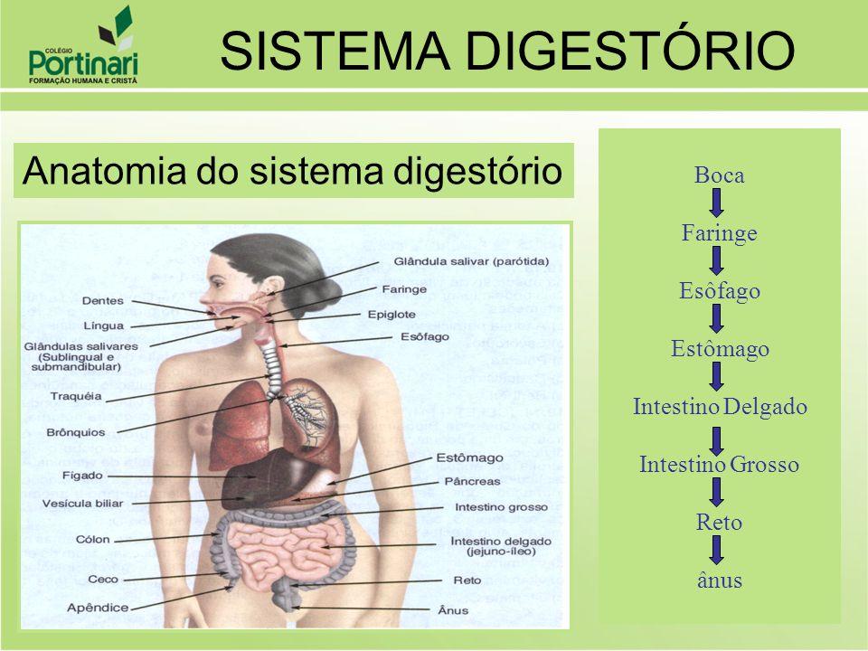 SISTEMA DIGESTÓRIO Anatomia do sistema digestório Boca Faringe Esôfago