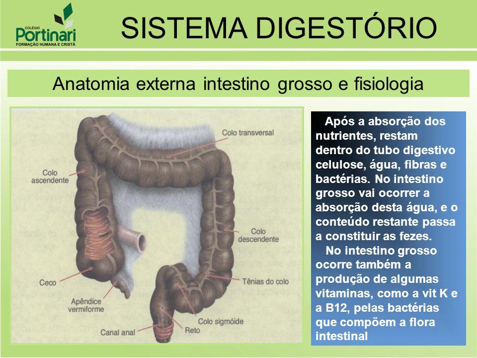 SISTEMA DIGESTÓRIO Anatomia externa intestino grosso e fisiologia