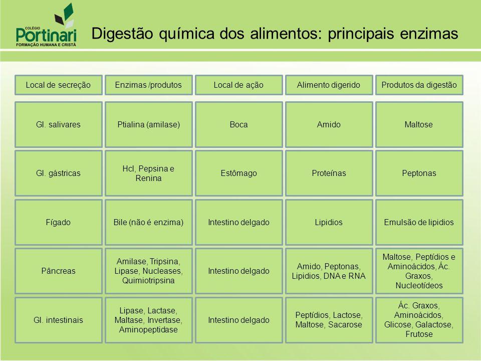 Digestão química dos alimentos: principais enzimas