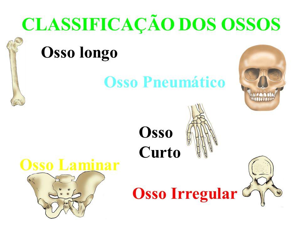 Classificacao dos ossos stage 1 sport for Esterno e um osso irregular