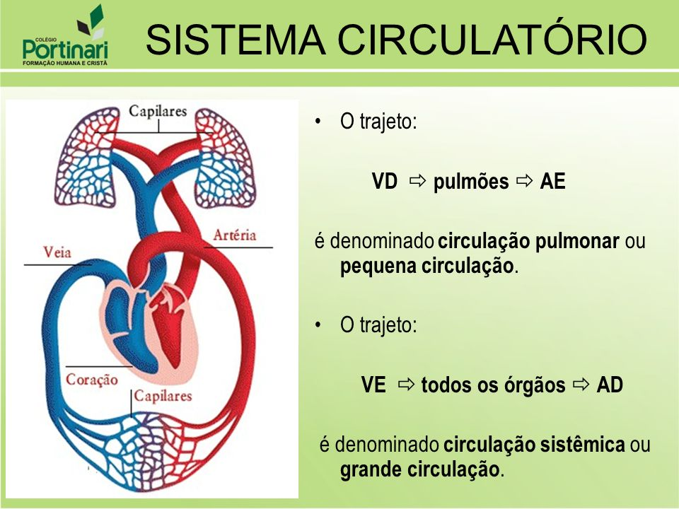 SISTEMA CIRCULATÓRIO O trajeto: VD  pulmões  AE