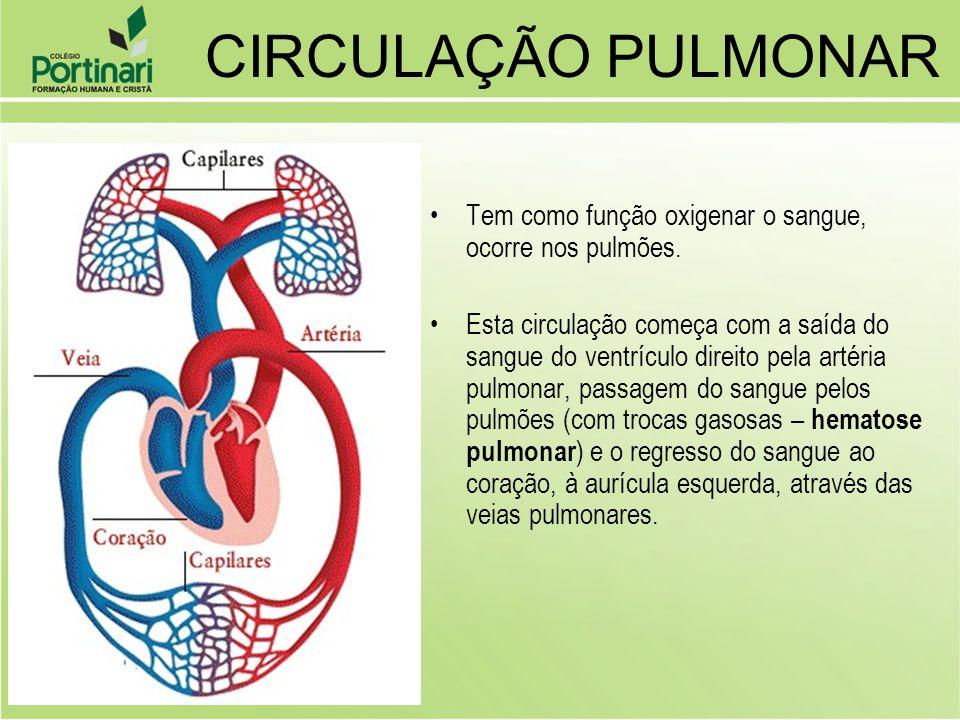 CIRCULAÇÃO PULMONARTem como função oxigenar o sangue, ocorre nos pulmões.
