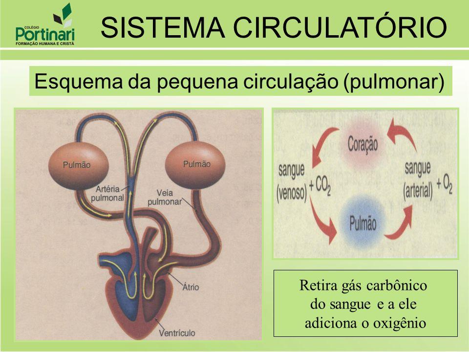 SISTEMA CIRCULATÓRIO Esquema da pequena circulação (pulmonar)