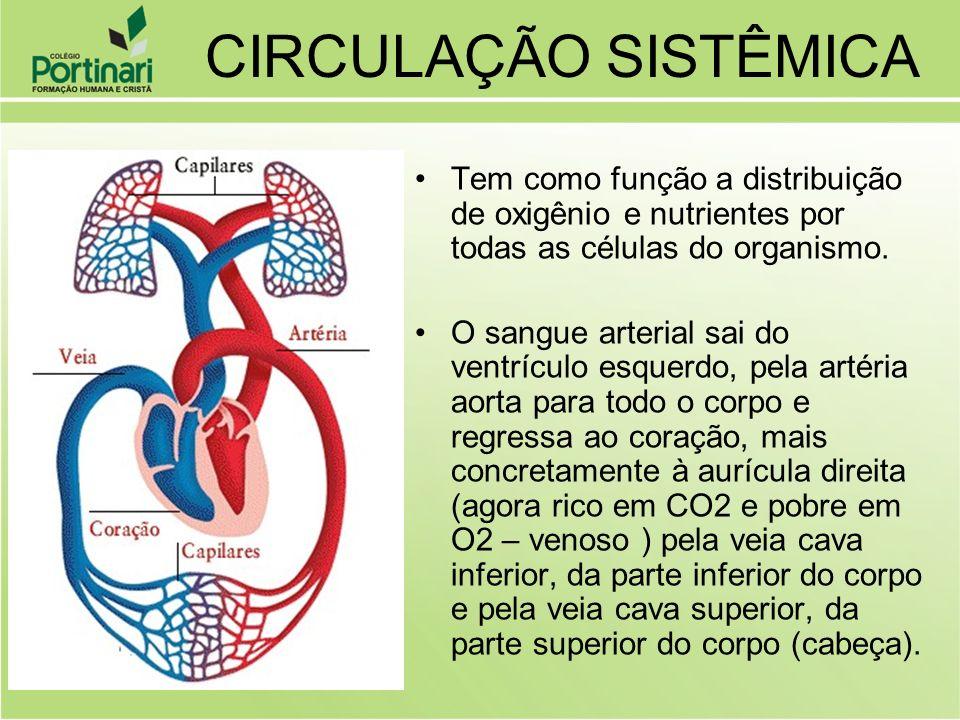 CIRCULAÇÃO SISTÊMICA Tem como função a distribuição de oxigênio e nutrientes por todas as células do organismo.