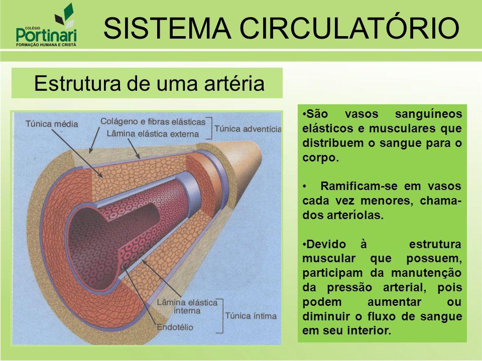SISTEMA CIRCULATÓRIO Estrutura de uma artéria