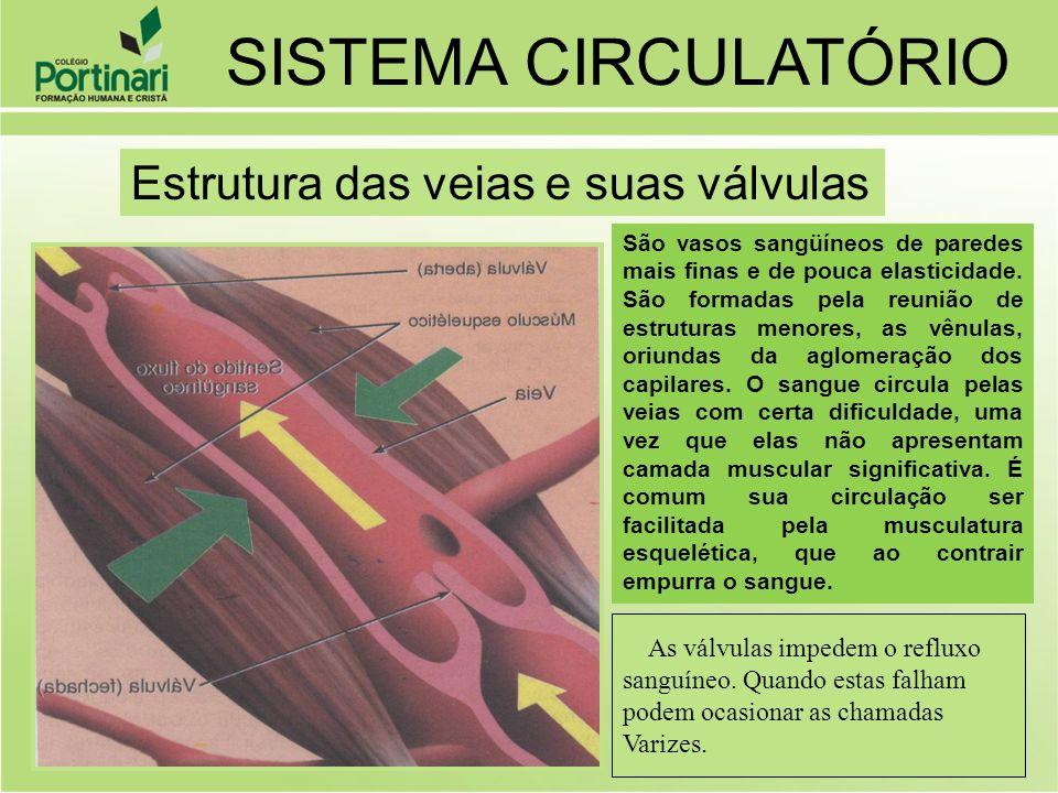 SISTEMA CIRCULATÓRIO Estrutura das veias e suas válvulas
